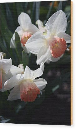 Wood Print featuring the photograph Signs Of Spring by Kay Novy