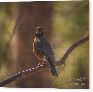 Signs Of Spring Wood Print by Mitch Shindelbower