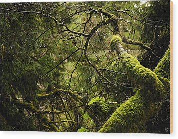 Wood Print featuring the photograph Silence In The Green Forest by Lisa Knechtel