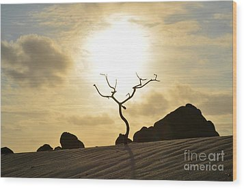 Silhouetted Tree At Dawn In Aruba Wood Print by DejaVu Designs
