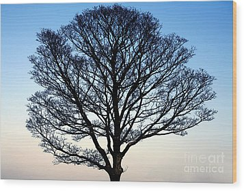 Silhouetted Tree Wood Print