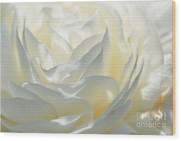 Silk Cream Floral Wood Print by Elaine Manley