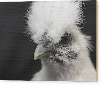 Silkie Chicken Portrait Wood Print by Jeannette Hunt