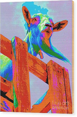 Silly Billy In Many Colors Photo Impressionism Wood Print by Annie Zeno