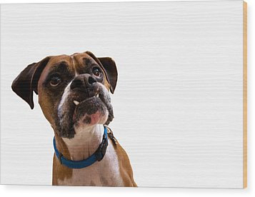 Silly Boxer Dog Wood Print by Stephanie McDowell