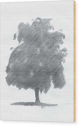 Silver Birch Drawing Number Two Wood Print by Alan Daysh