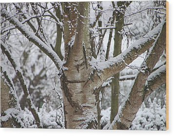 Wood Print featuring the photograph Silver Birch by Elizabeth Lock