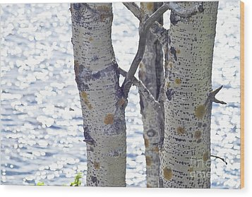 Silver Birch Trees At A Sunny Lake Wood Print by Heiko Koehrer-Wagner