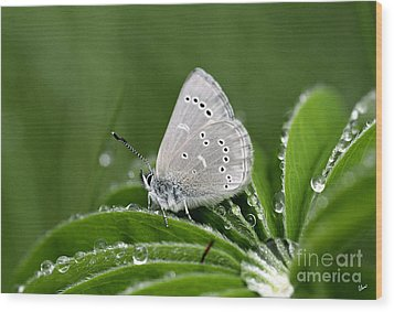Silver Butterfly Wood Print by Alana Ranney