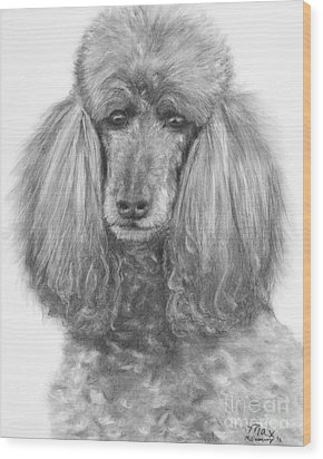 Silver Standard Poodle Drawing Wood Print