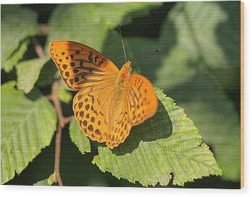 Wood Print featuring the photograph Silver-washed Fritillary  - Male - Argynnis Paphia by Jivko Nakev