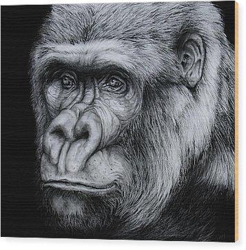 Silverback - A Drawing Wood Print