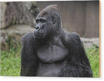 Silverback Gorilla Wood Print by Scott Hill