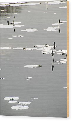 Wood Print featuring the photograph Silvery Lotus by Ankya Klay