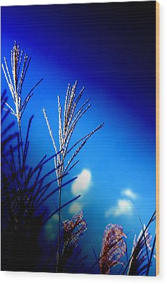Simple Beauty  Wood Print by Walter  Holland
