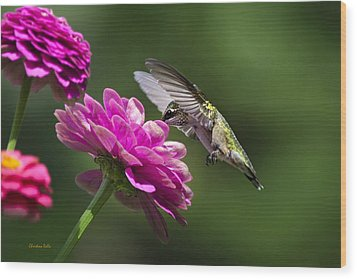 Wood Print featuring the photograph Simple Pleasure Hummingbird Delight by Christina Rollo