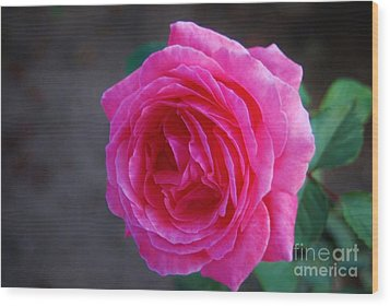 Simply A Rose Wood Print by Angela J Wright