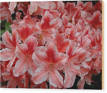 Simply Azaleas Wood Print by Rodney Lee Williams