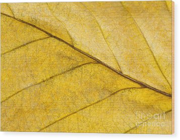 Simply Beech Wood Print by Anne Gilbert