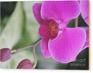 Wood Print featuring the photograph Simply Delicate Pink Orchid by Mary Lou Chmura