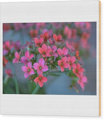 Simply Kalanchoe Wood Print by Penni D'Aulerio