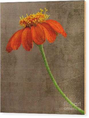 Simply Orange Wood Print