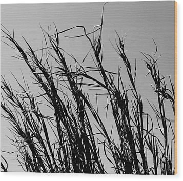 Wood Print featuring the photograph Simply Straw by Candice Trimble