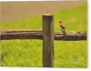 Singing Bird Wood Print by George Paris