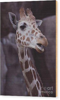 Singing Giraffe Wood Print by Anna Lisa Yoder