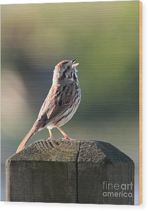 Wood Print featuring the photograph Singing Song Sparrow by Anita Oakley