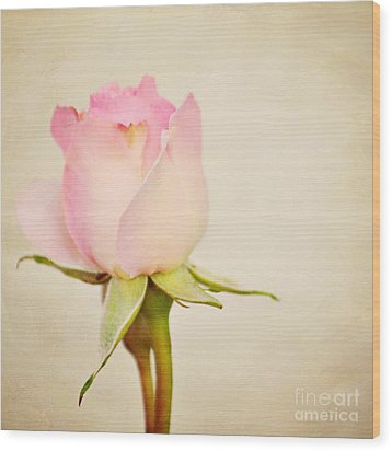 Single Baby Pink Rose Wood Print by Lyn Randle