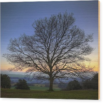 Single Bare Winter Tree Against Vibrant Sunset Wood Print by Matthew Gibson