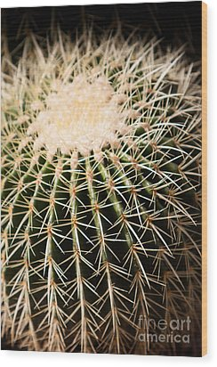 Single Cactus Ball Wood Print
