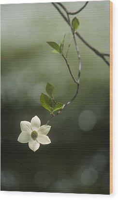 Wood Print featuring the photograph Single Dogwood Blossom by Judi Baker