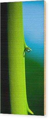 Single Drop Wood Print by Kim Lagerhem