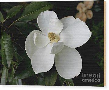 Single Magnolia II Wood Print by Michelle Wolff