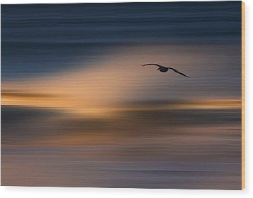 Wood Print featuring the photograph Single Pelican  73a1102 by David Orias