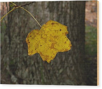Wood Print featuring the photograph Single Poplar Leaf by Nick Kirby