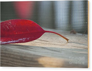 Single Red Leaf Wood Print by Terry Rowe