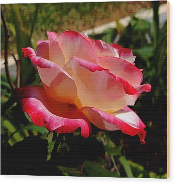 Single Rose Wood Print by Pamela Walton