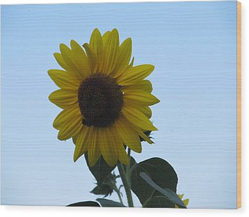 Wood Print featuring the photograph Single Sunflower And The Bees by Tina M Wenger