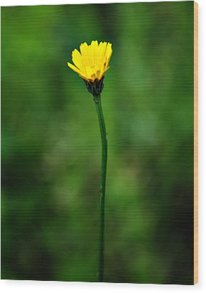 Single Yellow Flower Wood Print by Stephanie Grooms