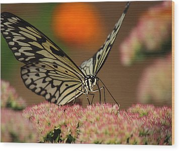 Sip Of The Nectar Wood Print by Randy Hall