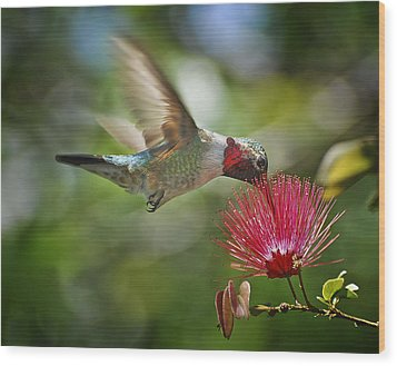 Sipping The Nectar Wood Print