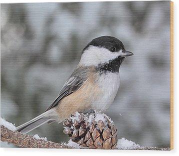 Sitting On A Snow Cone Wood Print