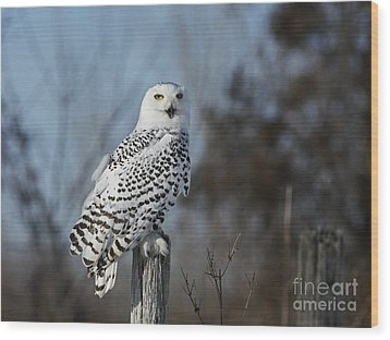 Sitting On The Fence- Snowy Owl Perched Wood Print by Inspired Nature Photography Fine Art Photography