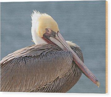 Sitting Pretty Pelican Wood Print by Bob and Jan Shriner