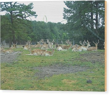 Six Flags Great Adventure - Animal Park - 121216 Wood Print by DC Photographer