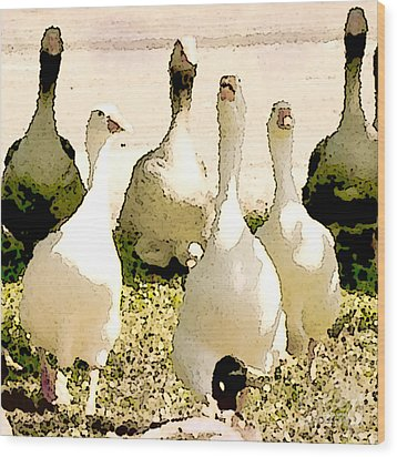 Six Geese And A Duck Wood Print by Artist and Photographer Laura Wrede