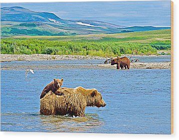 Six-month-old Cub Riding On Mom's Back To Cross Moraine River In Katmai National Preserve-alaska Wood Print by Ruth Hager